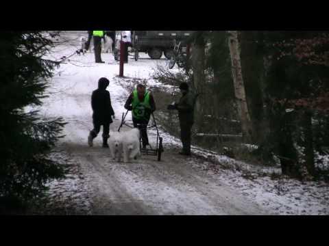Martin Quist - med Robbie og Pixie - Grib Skov 2010