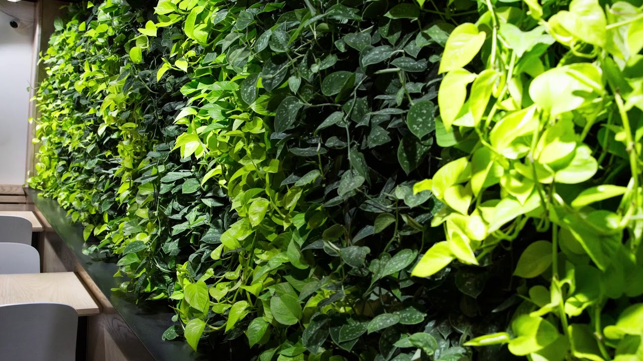 Video | Indoor living wall livens up coffee café | Proud ... on