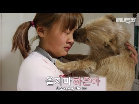 A dog that wipes a girl's tears.. (touching story)