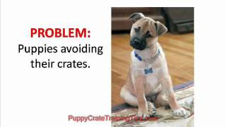 Puppy Crate Training Problems And How To Overcome Them