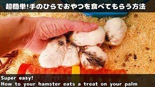 怖がりなハムスターの温もりを堪能するにはこれが一番かなと思います。...