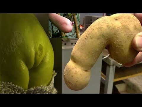 Top 10 Weird Funny Shaped  FRUITS & VEGETABLE  - (natural shaped, no photo shopped) | NEW 2017