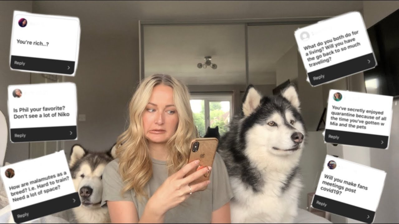 Life With Malamutes Youtube Channel Analytics And Report Powered By Noxinfluencer Mobile 3 giant alaskan malamutes also known as big teddy bears and a maine coon cat called milo. life with malamutes youtube channel