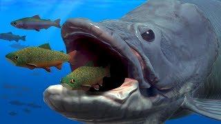 NEW GIANT ARAPAIMA EATS EVERYTHING WHOLE!!! - Fish Feed Grow
