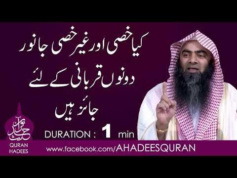 Kya Khassi or Ghair Khassi Janwar Qurbani kay liay Jaiz hain ?