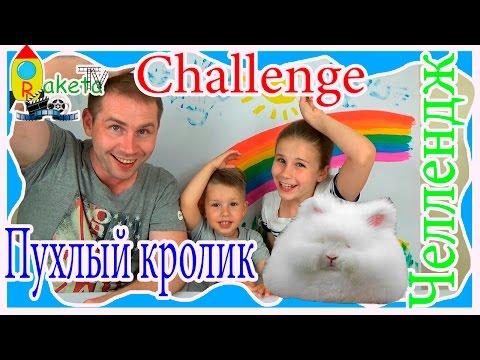 rabbits игра