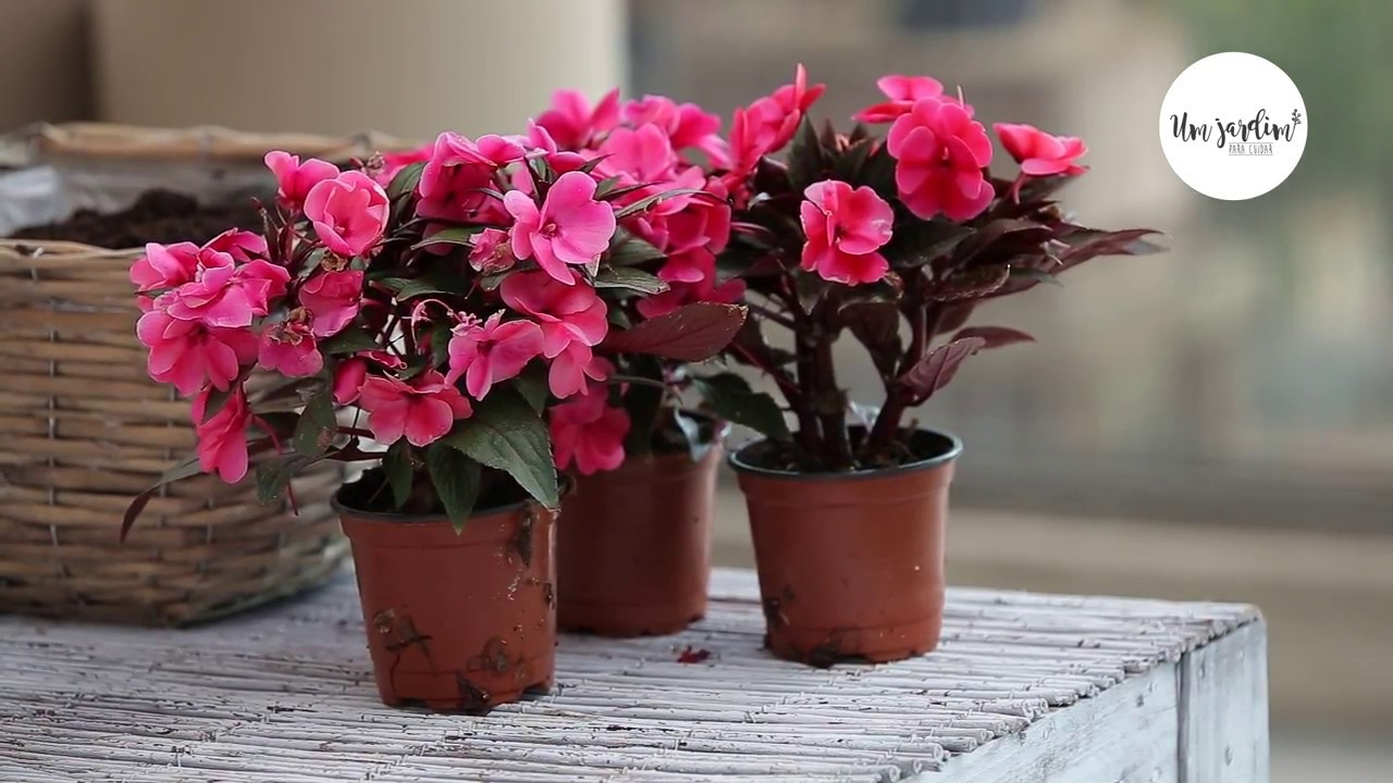 Flores ideais para zonas de sombra youtube - Flores de sombra ...