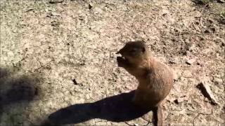 Wild Animals (Gopher) eating from hand