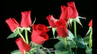 Yo Soy la Rosa de Sarón y el Lirio de los Valles (HD)