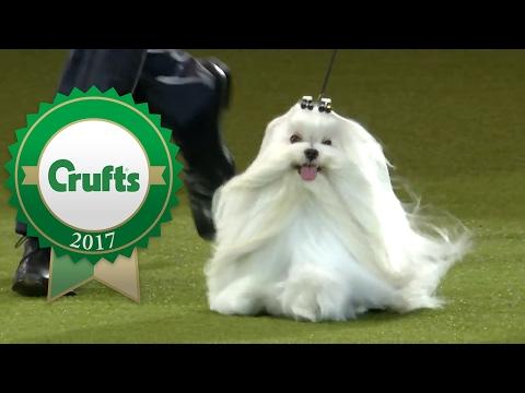 Eukanuba World Challenge Final   Crufts 2017
