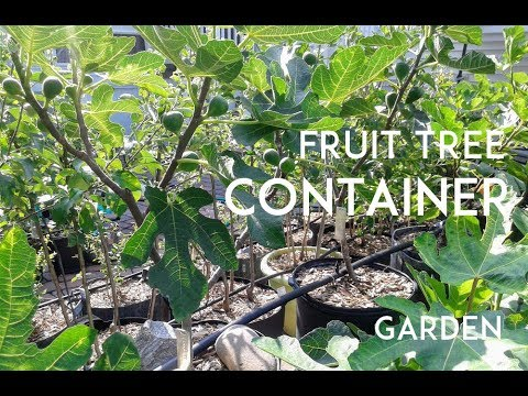 Fruits&Vegetables Perfect for Growing in Containers