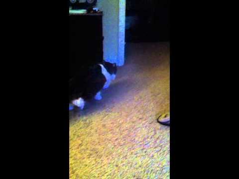 Cautious cat has trust issues with carpet