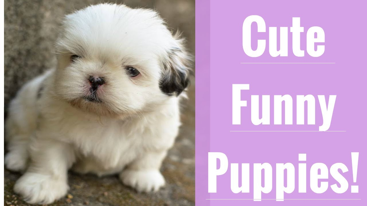 Very Best Cute and Funny Puppy Compilation