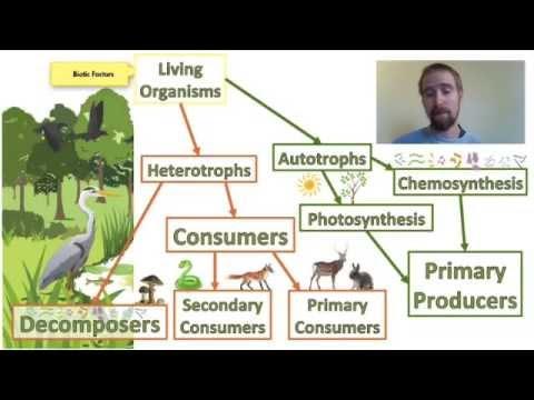 Biology 01-2 Ecosystems - Biotic And Abiotic Factors