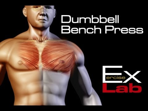 dumbbell-bench-press-:-chest-exercises