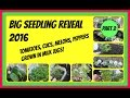 Big Seedling Reveal 2016 - Tomatoes, Cucumbers, Watermelons, Cantaloupes, Peppers  (Part 2 of 2)