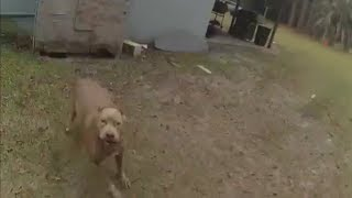 Deputy Shoots Pitbull Charging Officer (WARNING)