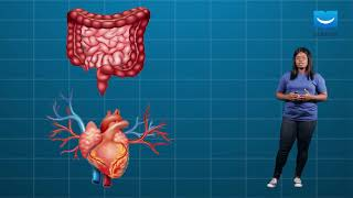 The Systems Of The Human Body | Basic Science