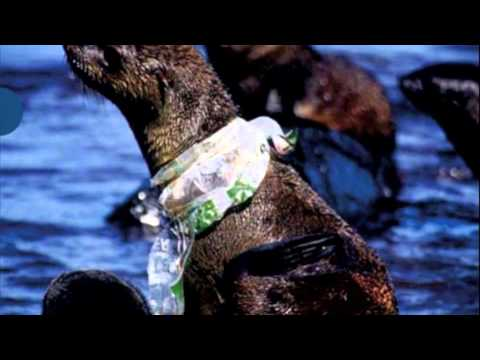 Ocean Pollution - Special Topics in Community Health