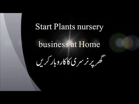 Nursery business at home  Part 1- which plants do you choose Hindi-Urdu