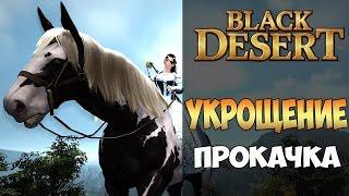 Black Desert - как словить коня или полный гайд по укрощению