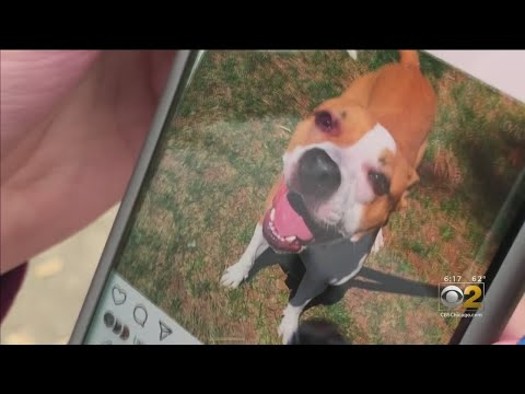 Lance Houston - Scammer is Targeting Chicago Lost-Pet Owners