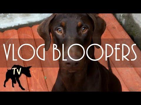 Funny Dog Vlog Bloopers | Baja Dog Vlog 10