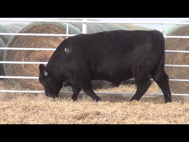 Express Ranches Lot 186