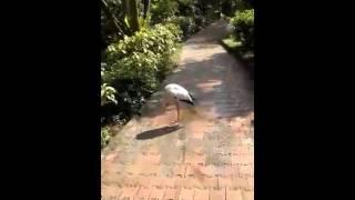 9 more bird sanctuary