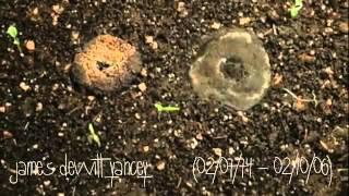 J Dilla - Don't Cry