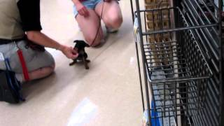 Puppy Class At Petco. Week One.
