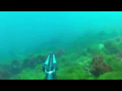 Spearfishing In Morocco
