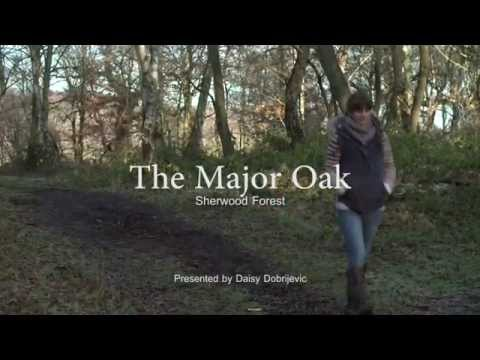 Sherwood Forest - An Introduction To The Major Oak