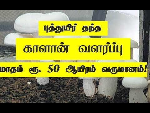 www.kalanpannai.com Suya Siru Tholil Thozhil Button Kalan Valarpu  Mushroom Cultivation Training