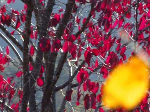 紅葉 2012 autumn