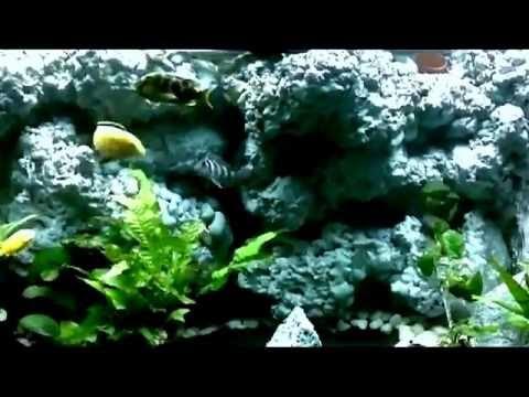 acquario ciclidi africani con sfondo 3d, cascata e ventole di ... - Sfondo Esterno Per Acquario Fai Da Te