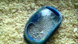 How to litter train your hamster★★★★★
