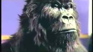 Cadbury's Gorilla Advert (Aug 31st 2007)