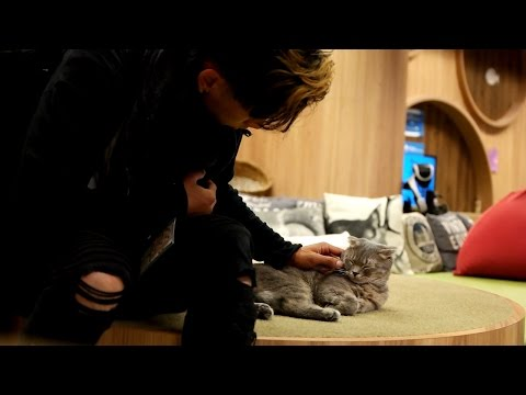 THE MOST CUTEST CAT CAFE IN JAPAN!