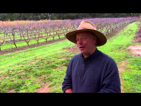 My Australia: Fruit Farm