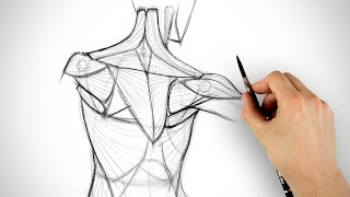 How to Draw the Shoulder Bones