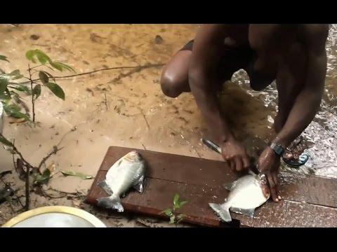Cách bắt và chế biến cá Piranha trong rừng Amazon