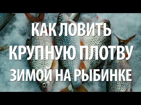 зимняя ловля синца на рыбинском водохранилище