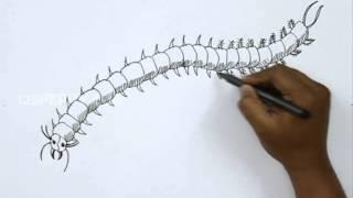 How to Draw a Centipede