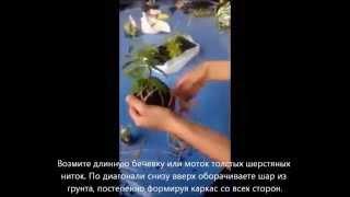 Как сделать подвесной висячий сад своими руками из комнатного растения (видео)(Садовники Ее Величества (www.king-flower.com) на данном видео-мастер классе покажут вам как сделать японский подвесн..., 2014-06-18T07:35:54.000Z)