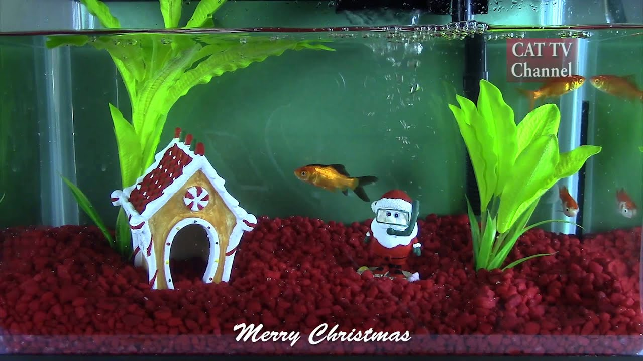CAT TV (Television for Cats) - Christmas Fish Tank - YouTube