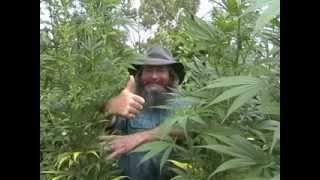 Marijuana  Kog - How To