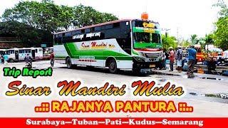 BERANI ADU BANTENG! Bus SINAR MANDIRI, RAJANYA PANTURA! Trip Report Surabaya—Pati
