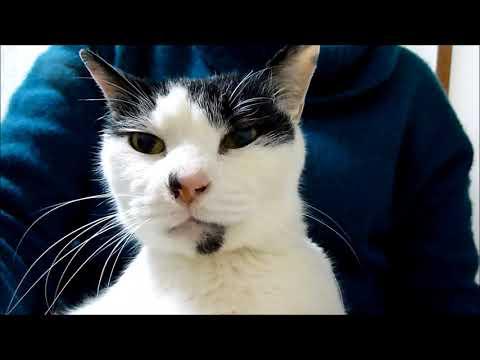 暗闇に生きる猫~保護して6か月 Rescued blind cat 6months passed