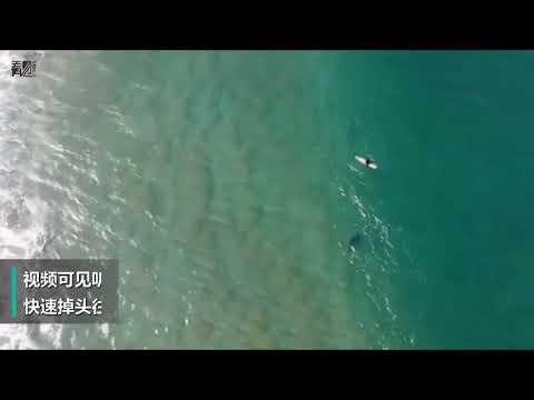 無人機警告鯊魚 澳洲衝浪者逃過一劫
